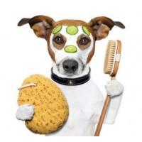 Professional pet clipper Pet Clipper HL 6609
